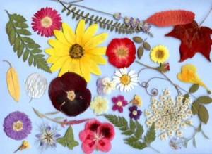fiori-di-bach1